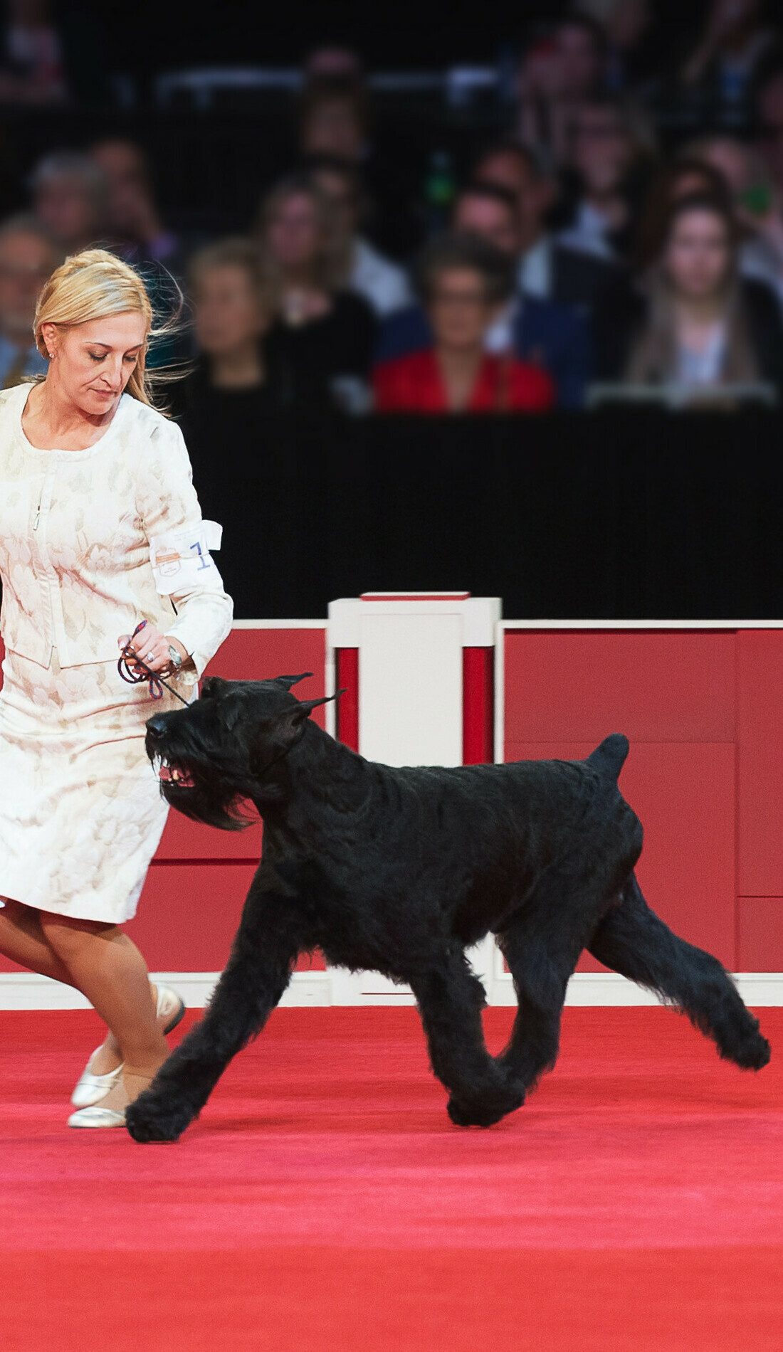 A American Kennel Club live event