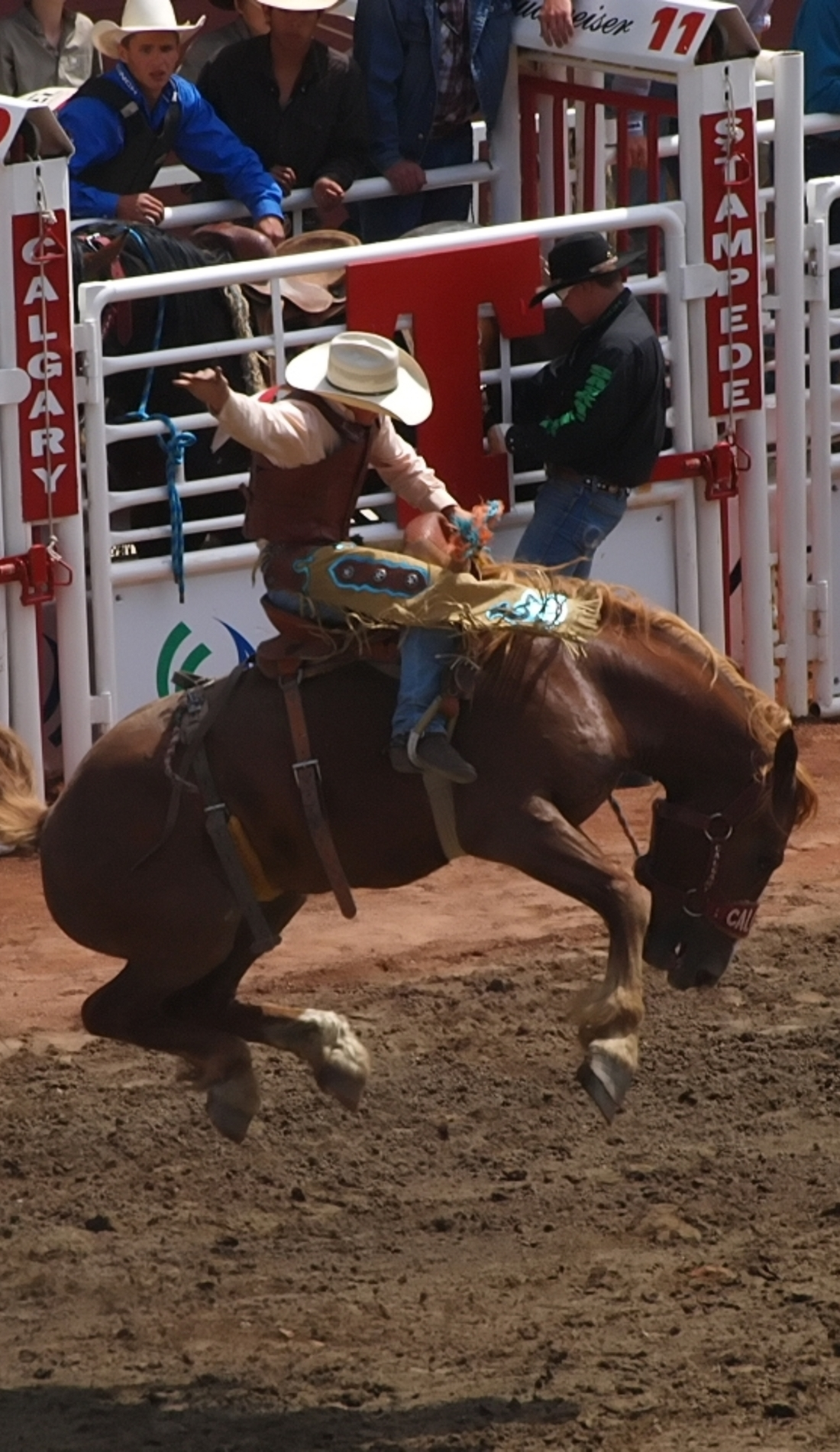 A Calgary Stampede Rodeo live event