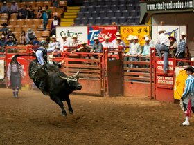 Fort Worth Stock Show and Rodeo - Extreme Mustang Makeover Top 10 Finals
