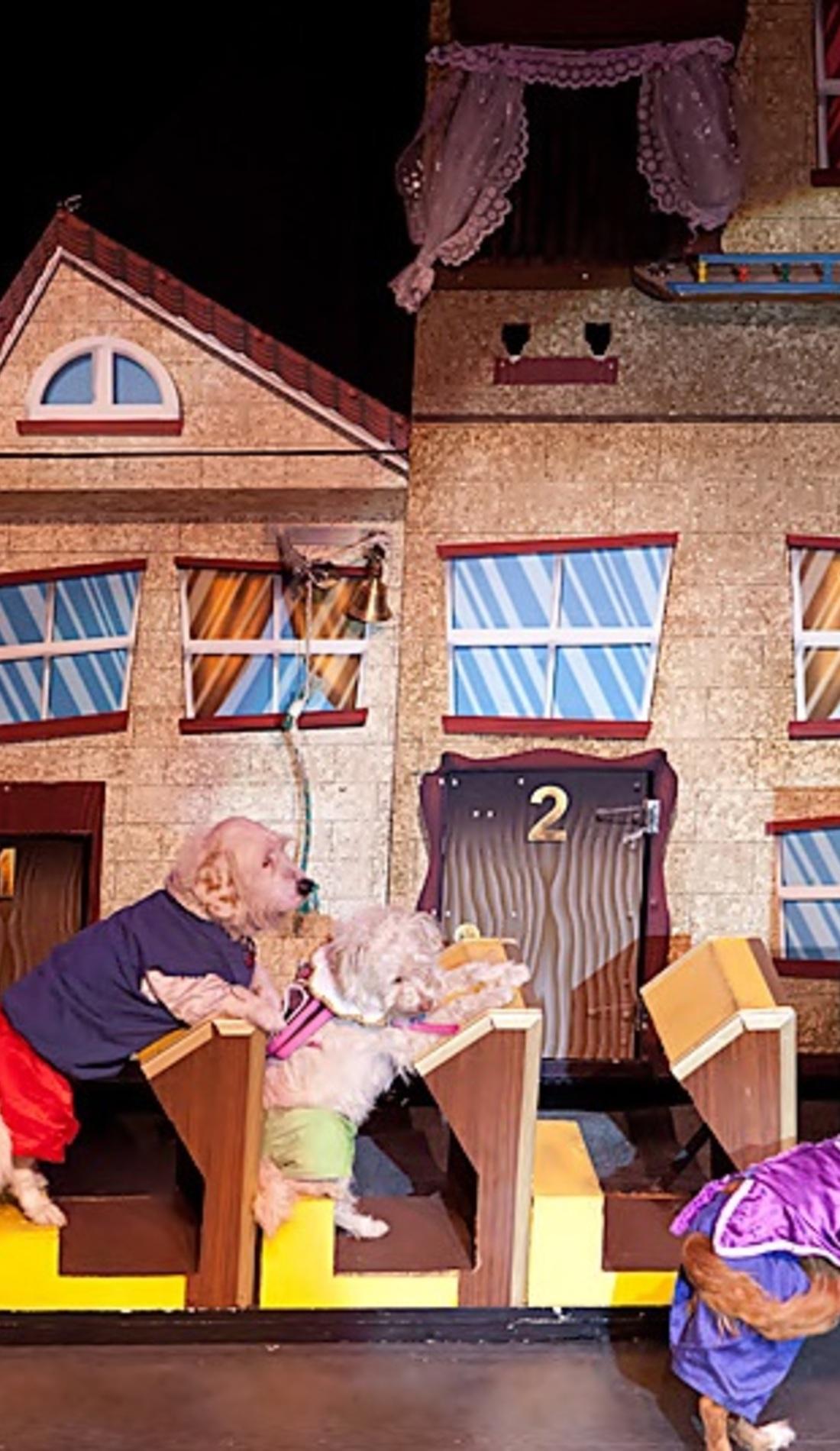A Popovich Comedy Pet Theater live event