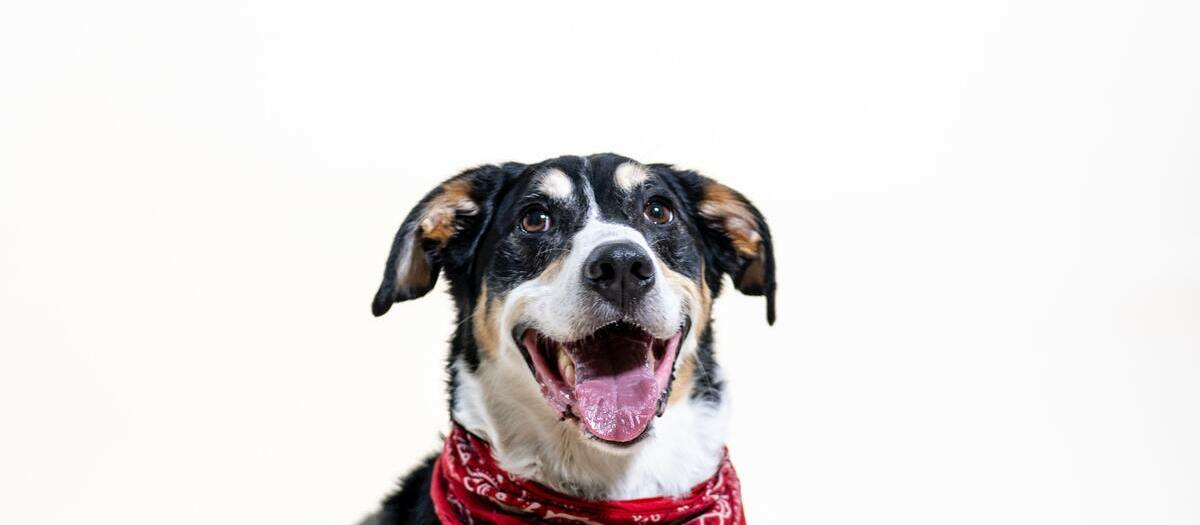 Westminster Kennel Club Dog Show Tickets